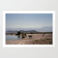The Waterhole Art Print