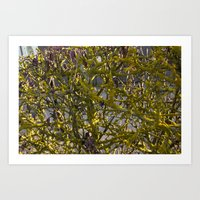 Moss In The Spring Art Print