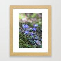 Anemone in forest Framed Art Print