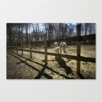 horse. Canvas Print