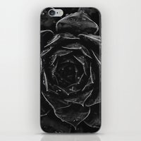 succulent 1 iPhone & iPod Skin