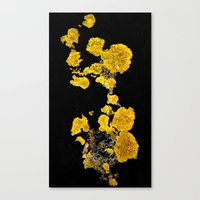 Yellow Lichen Canvas Print