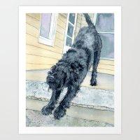 Stretching Black Labradoodle Art Print