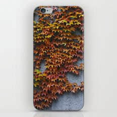 Autumnal iPhone & iPod Skin