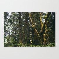 Rainforest Moss Canvas Print