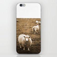 Sheep in a field iPhone & iPod Skin