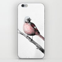 Fink (Karmingimpel) | Fi… iPhone & iPod Skin