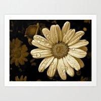 Flower Drops Art Print