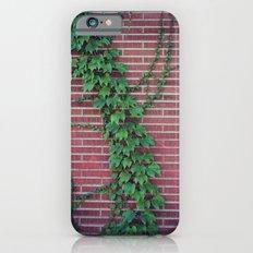 Brick Wall Ivy iPhone 6 Slim Case