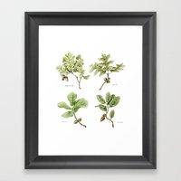 The Oaks Framed Art Print