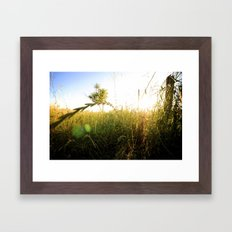 Shrub Framed Art Print