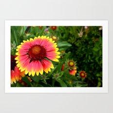 Summer Colours Art Print