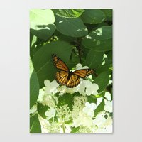 Butterfly in Hydrangea Canvas Print