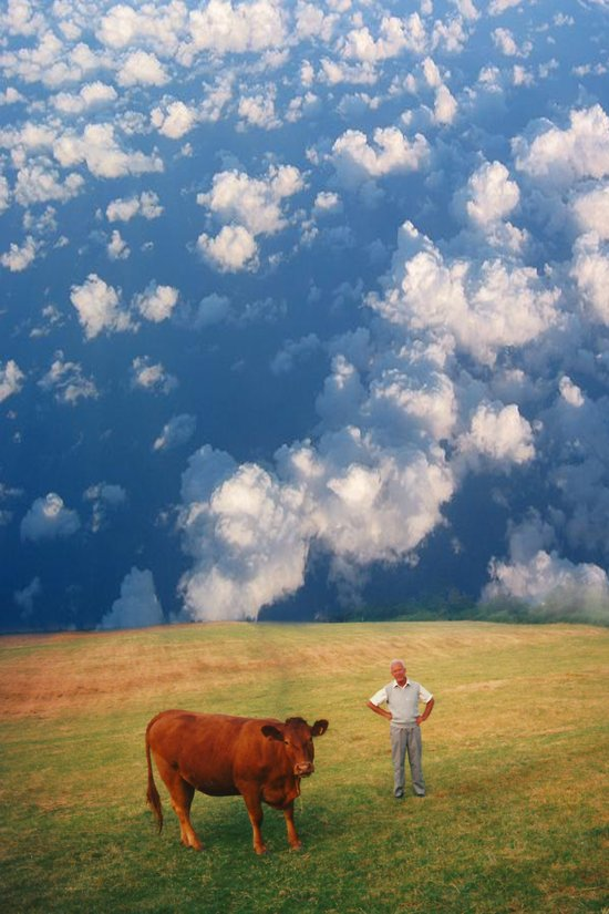 How Now Brown Cow #1 - What's that man doing in my field? Art Print
