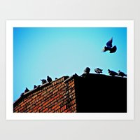 Looking for a Place to Land Art Print