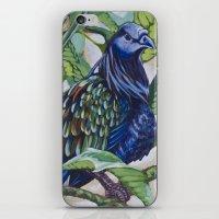Nicobar Pigeon iPhone & iPod Skin