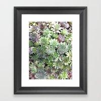 Desert Flower I Framed Art Print