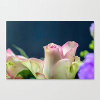 Softness of a rose Canvas Print