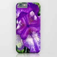 iPhone & iPod Case featuring Purple in Bloom by Sara Miller