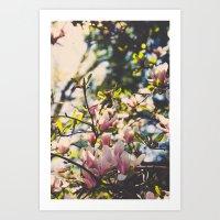Magnolias In Spring Art Print