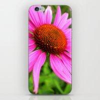 coneflower iPhone & iPod Skin