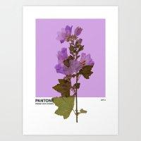 PANTONE 529 U Art Print