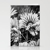 Desert Daisies (bnw) - Daisy Project in memory of Mackenzie Stationery Cards