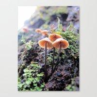 Rainforest No.2 Canvas Print