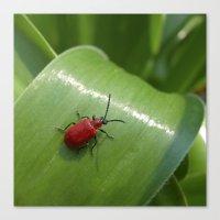 Little Red Beetle IX Canvas Print