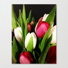 Tulips United Canvas Print