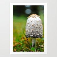 Fluffy mushroom Art Print