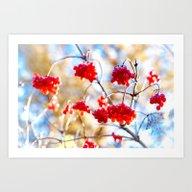Arrowwood Berries Art Print