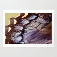 Butterfly Wing Macro Art Print