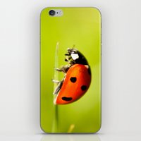 On top of a Grass iPhone & iPod Skin