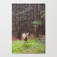 Deer 2.  Canvas Print