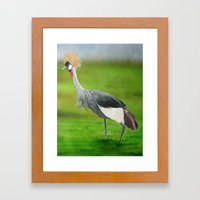 Crested Crane Framed Art Print