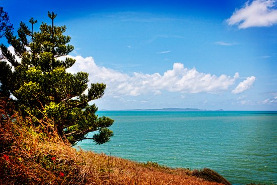 Pine Tree on a Headland with Topical Ocean Art Print