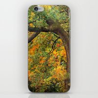 Autumn Warmth iPhone & iPod Skin
