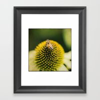 Bee Ball Framed Art Print