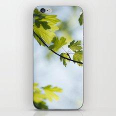 Refresh iPhone & iPod Skin
