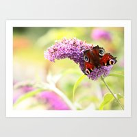 pastel peacock (butterfly) Art Print