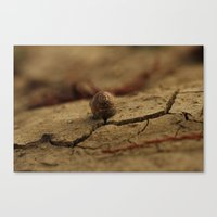 Drought, and life Canvas Print