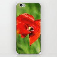 Beautiful Poppy iPhone & iPod Skin