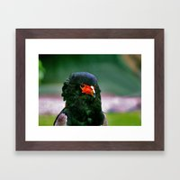 Bateleaur Eagle Framed Art Print