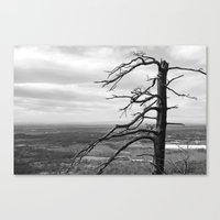 Good Ol Nature Canvas Print