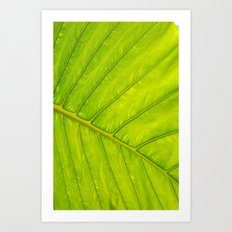 Tropical Leaf Vein Abstract Art Print