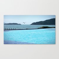 Swimming Pool Gull Canvas Print
