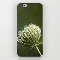 Closed Queen Anne's Lace iPhone & iPod Skin