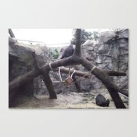 Zoo Canvas Print
