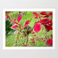Mini Bird's Nest Art Print